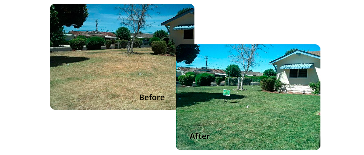 Lawn Painting in Vacaville, CA